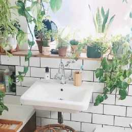 Plants for Bathroom