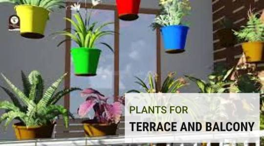 Plants for Terrace and Balcony