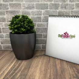 Plants for Office Desks