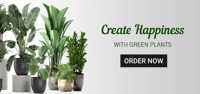 Online plants Delivery in India