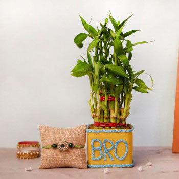 Rakhi with Plants