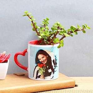 Valentine Jade Terranium Plant