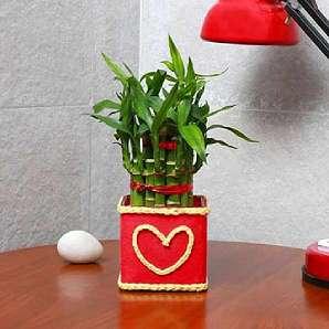 Valentine Lucky Bamboo