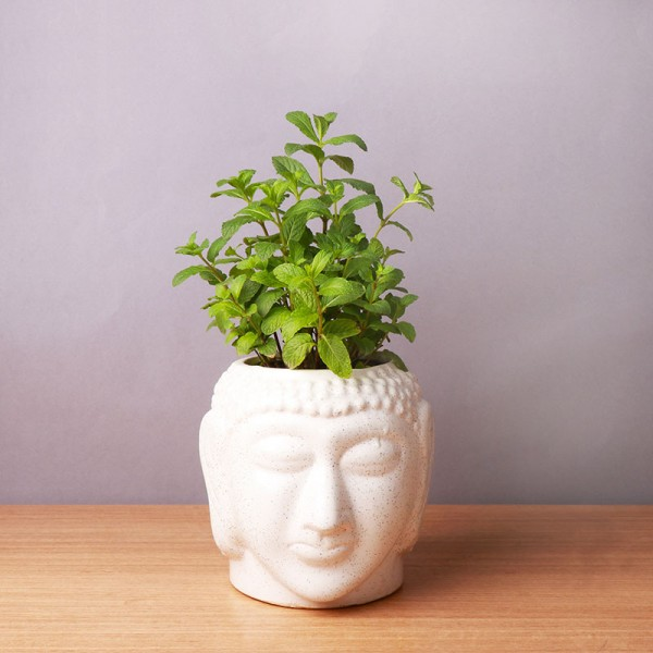 One Mint Plant in Buddha Face Pot (Pudhina)