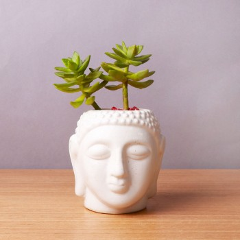 One Sedum Succulent Plant in Buddha Face Pot