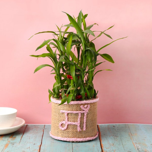 """2 Layer Lucky Bamboo Plant in Glass Vase with Glass Vase wrapped with jute packing and """"Ma"""" written with pink rafia"""