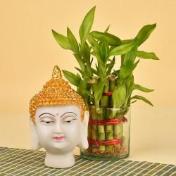 Buddha Idol N Lucky Bamboo