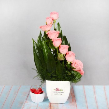 Floral Arrangement of 10 Pink Roses in a White Plastic Pot
