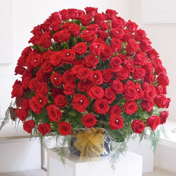 500 red roses arrangement