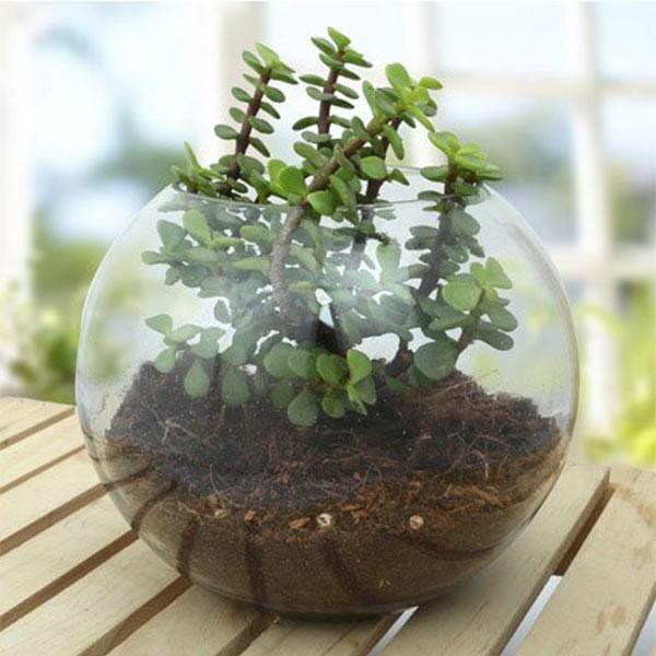 Fantastic Jade Terrarium