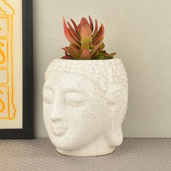 indoor Succulent Plant