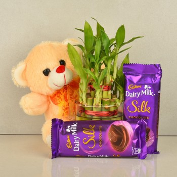 2 Layer lucky bambo in a glass vase with Teddy bear (6 inch) and 2 Cadbury Dairy Milk Silk