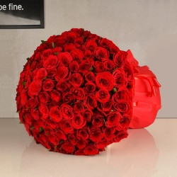 Sizzling Red Roses