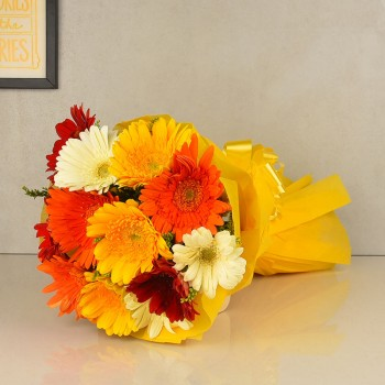 12 Colorful Gerberas with Paper Packing