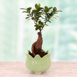 Exotic Bonsai