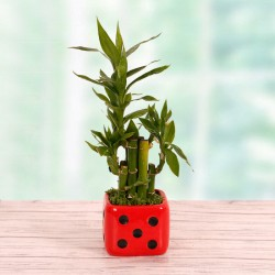 Potted Grass Bamboo