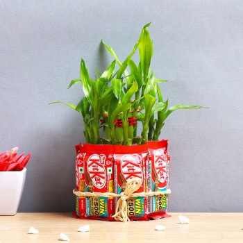 One 2 Layer Lucky Bamboo and Glass Vase covered with 8 Kitkat Chocolates (13.2 gm)