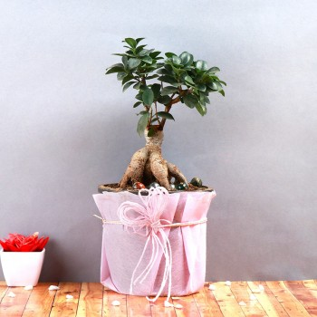 One Bonsai Plant in a Pot