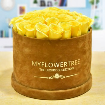40 Yellow Roses in a Brown Signature Velvet Box