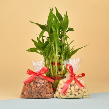 Almonds (100 gms) and Cashew Nuts (100 gms) with 2 Layer Lucky Bamboo Plant