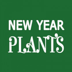 New Year Plants
