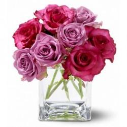 Pink Bloom Roses