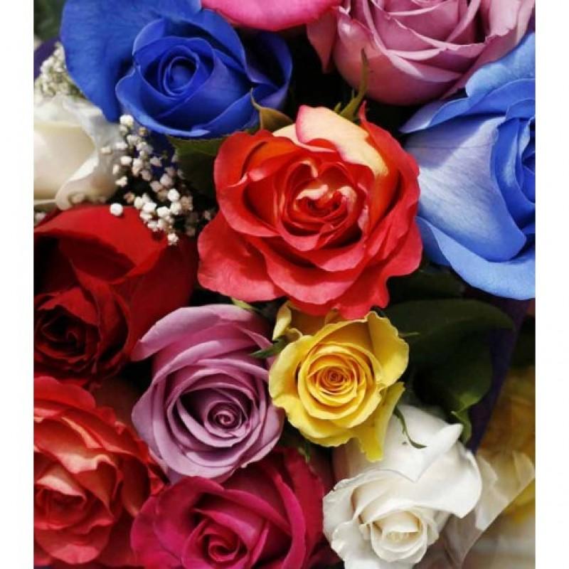 Spray Rainbow Roses