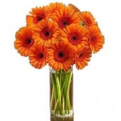 Orange Happy Gerberas