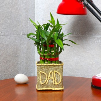 "One Two Layer Lucky Bamboo decorated with Paper Packing and ""DAD"" written on it"