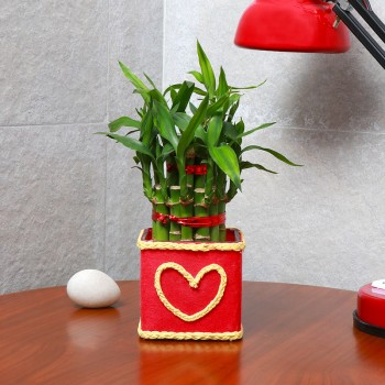 "One Two Layer Lucky Bamboo decorated with Paper Packing and ""Heart Shape"" Design on it"