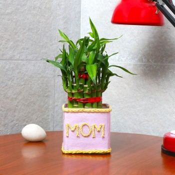 "One Two Layer Lucky Bamboo Decorated with Paper Packing and ""Mom"" written on it"