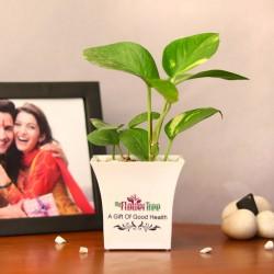 Serendipitous Money Plant
