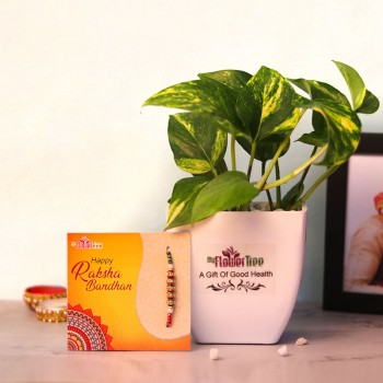 Rakhi with Money Plant
