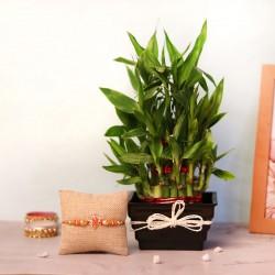 Lucky Bamboo Rakhi Set
