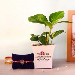 Money Plant Rakhi Set