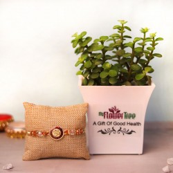 Jade Plant Rakhi Set