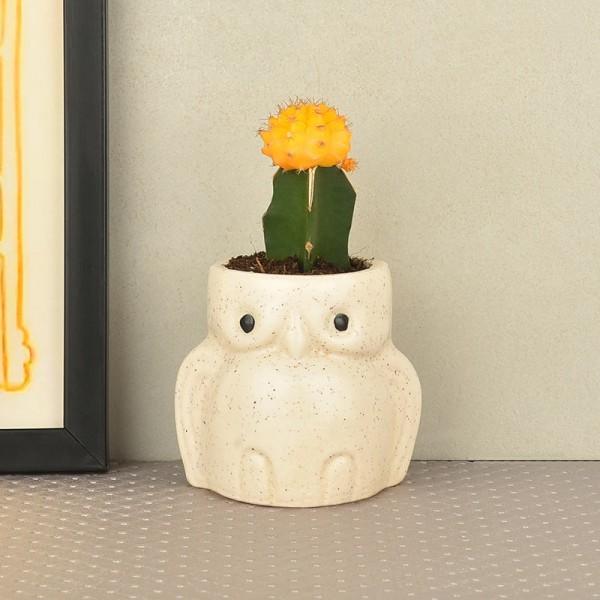 Moon Cactus in owl vase