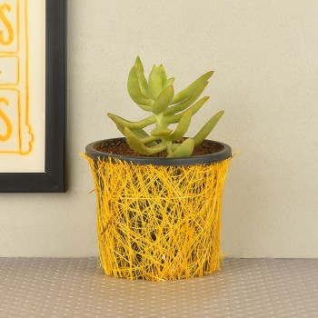 Secculents plant(Sedum morganianum) in a vase wrapped with yellow jute