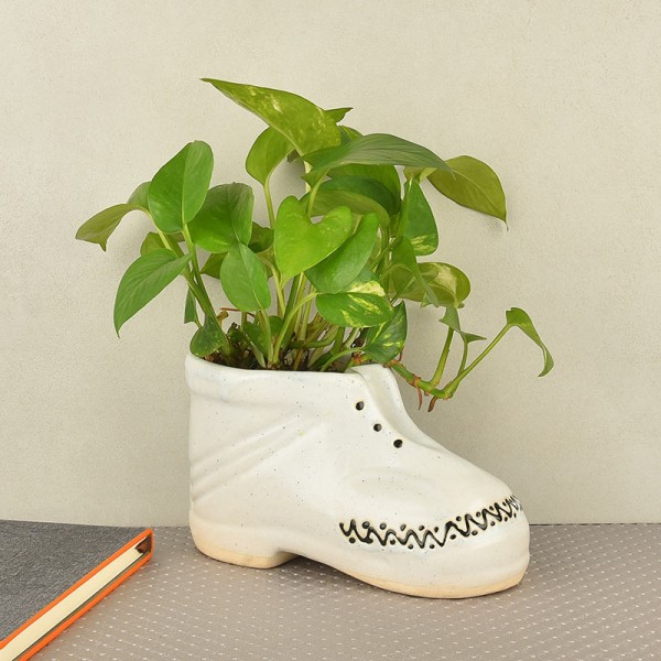 Money Plant in boot shaped vase