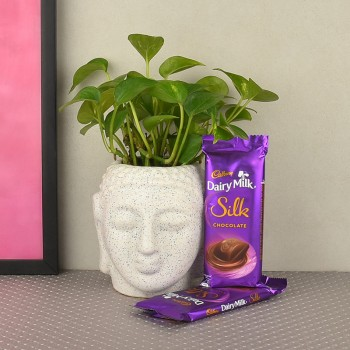 Money Plant in buddha head shaped vase with 2 silk chocolate( 60gms each)