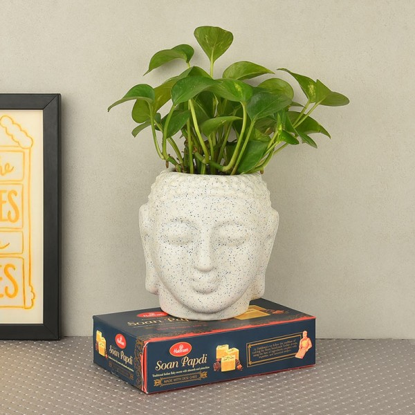 Money Plant in buddha head shaped vase and 250 gms haldiram's soan papdi