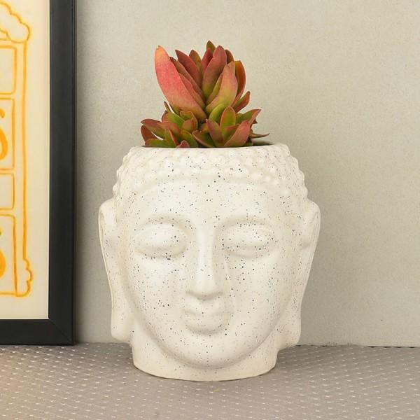 Secculent plant(Sedum rubrotinctum) in buddha head shaped vase