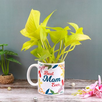 "One ""Best Mom Ever"" Printed White Handle Mug and One Money Plant"