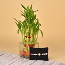 Pearl Rakhi N Lucky Bamboo