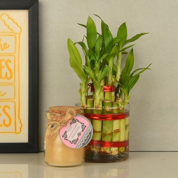 Lucky Bamboo with Vanilla Jar Candle