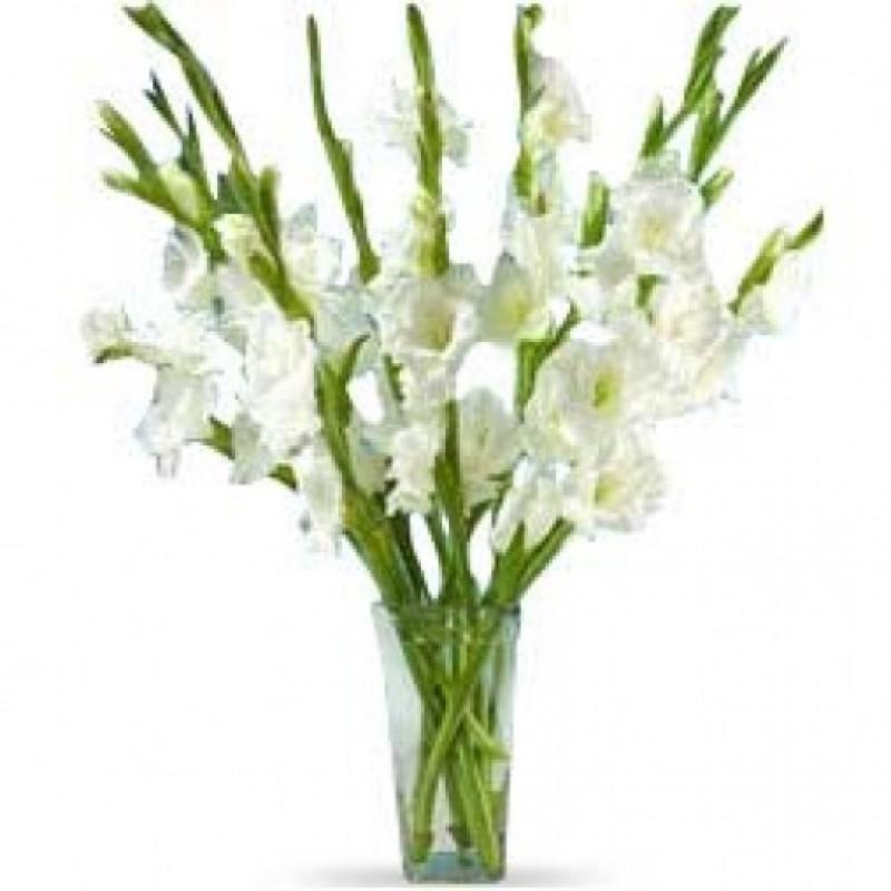 White Glads XL