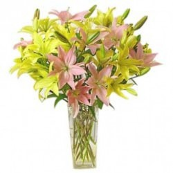 Yellow and Pink Lilies