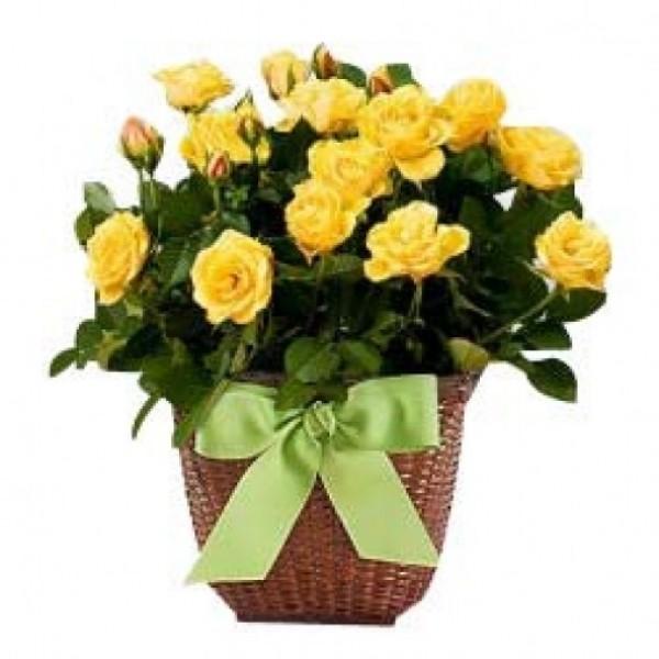 Best Friend Bouquet
