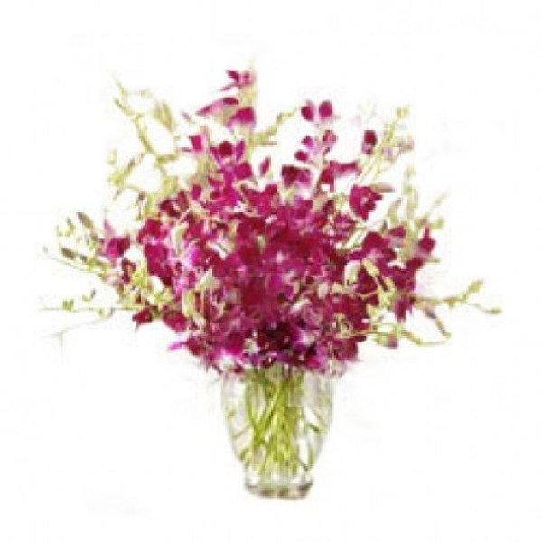 8 Purple Orchids in a Glass Vase