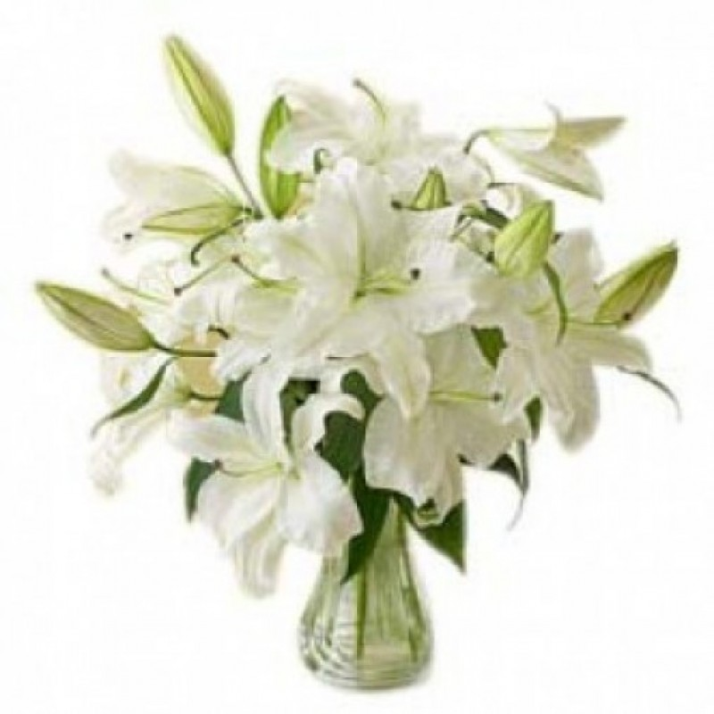 White Lily Love